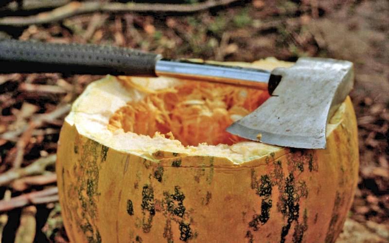 Среди множества видов и сортов овоща можно остановить свой выбор на твердокорой тыкве