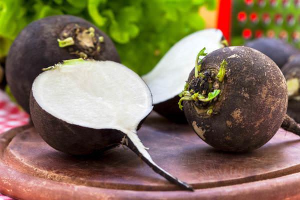 Польза редьки для организма человека и ее целебные свойства обусловлены химическим составом плодов