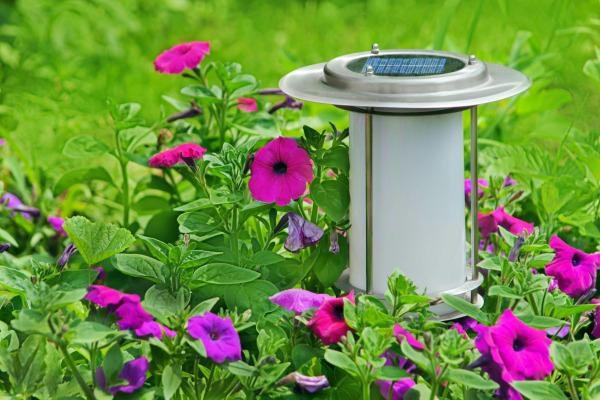На выставке Вы сможете не только найти все необходимое для дачи и сада