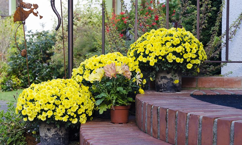 Все растения нуждаются в поливе. Необходимо следить за тем, чтобы почва всегда оставалась влажной