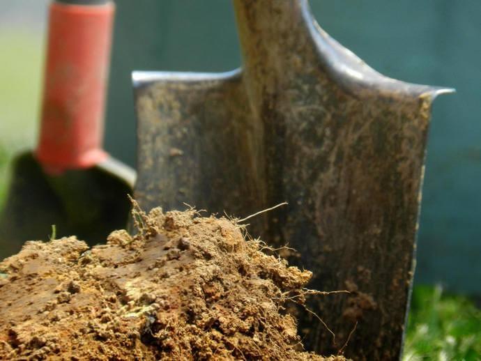 Периодически следует вносить в грунт минеральные и органические удобрения