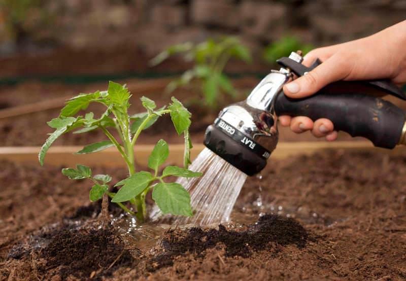 Полив томатов следует производить тогда, когда верхний слой земли (2-5 см) хорошо просох