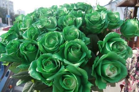 Зеленого цвета розы