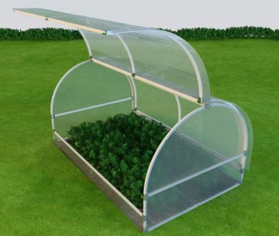 Мини теплица используется в основном для выращивания рассады цветочных и овощных культур в конце зимы – начале весны