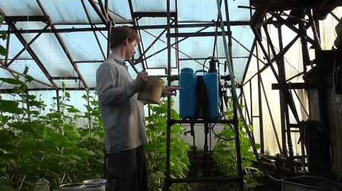 Обработка огурцов в теплице: для чего и как проводить, против болезней, вредителей, народные рецепты, применение покупных средств, правила выполнения, советы