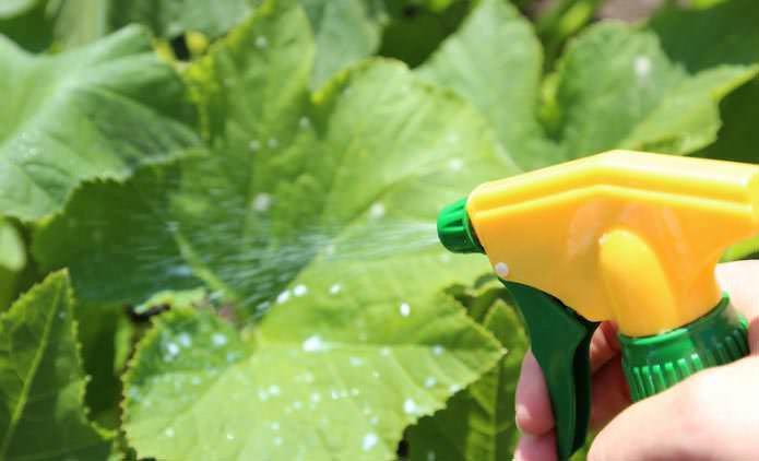 Поздняя посадка теплолюбивых растений в теплицу не позволит получить максимально большой урожай, но можно попробовать простимулировать образование завязей специальными биопрепаратами