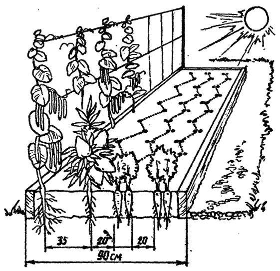 Огурцы могут расти сразу с несколькими культурами.  Прекрасным соседом для огурцов является перец