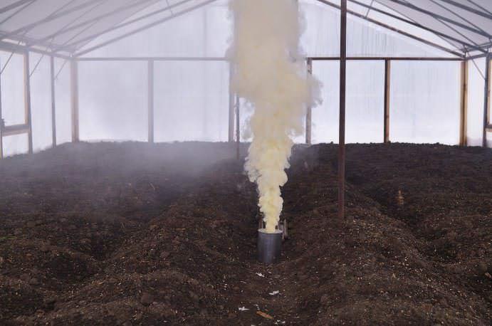 Окуривание в теплице выполняется при помощи серных свечей в отсутствии растений