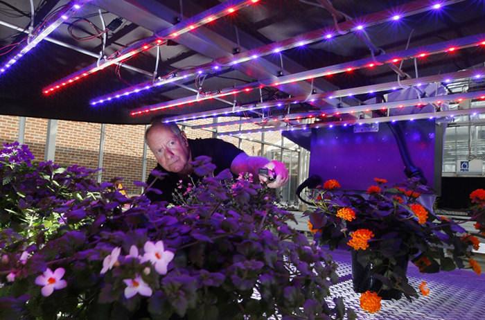 Инфракрасные лампы не менее популярны и востребованы для выращивания теплолюбивых растений