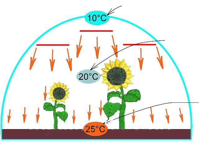 С таким видом отопления нагреву подлежит не воздух, а выращиваемые культуры и почвы, от которых тепло распространяется по всему обогреваемому помещению