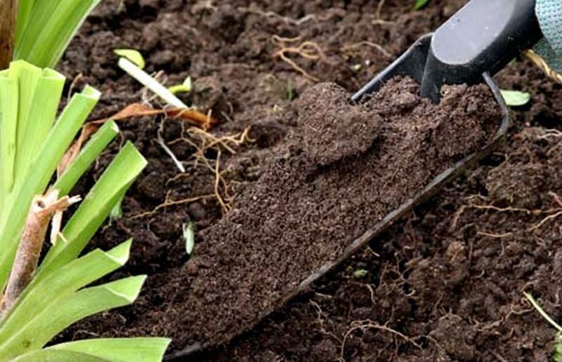 Пекинской капусте весьма важен состав почвы и степень её плодородия