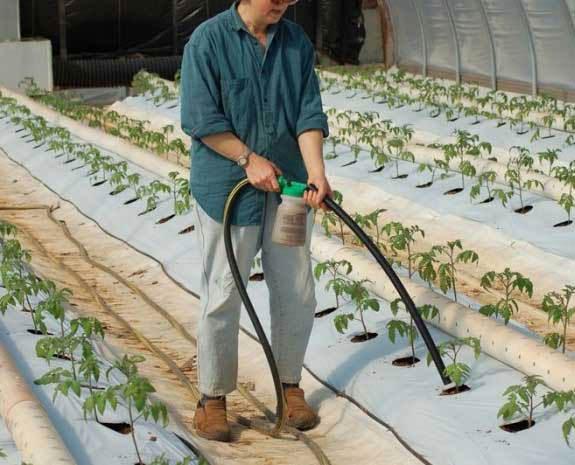 Удобрить рассаду можно различными удобрениями. При этом неважно какой способ внесения удобрения вы выбрали –  действовать следует разумно: учитывать состав почвы, потребности растения и следовать согласно инструкции