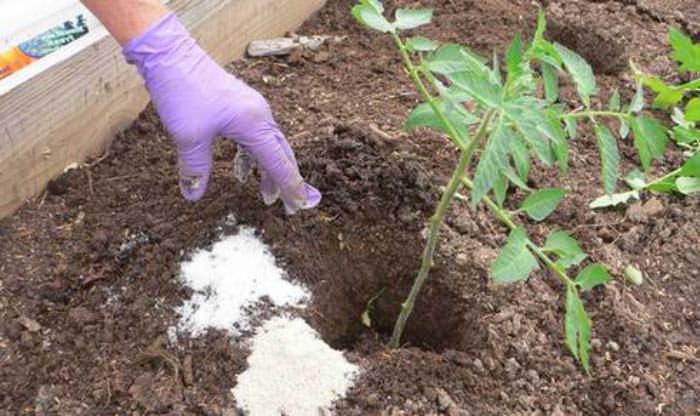 Для хорошего урожая необходимо подкормить каждый кустик  выбранным удобрением