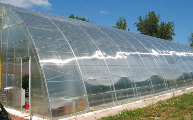 Фермерские строения, изготовленные из поликарбоната, не нуждаются в проведении капитальных ремонтов