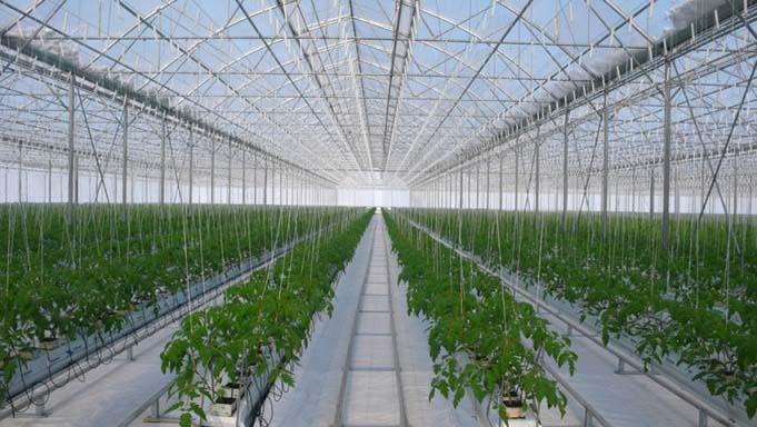 Поликарбонатные теплицы для подсобного хозяйства приобретают с/х предприятия для замкнутого цикла производства