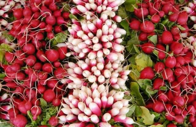 Кроме срока вегетации, между сортами редиса есть и масса других различий – вкус, цвет, форма и т.д.