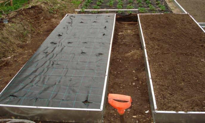 Расстилать укрывной материал по поверхности грядки лучше во время пересадки клубники садовой на новое место