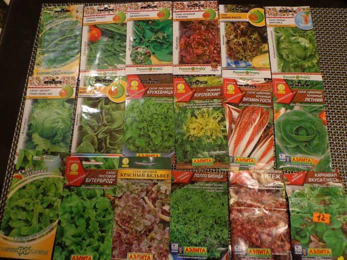 Семена сеют в открытый грунт с апреля по август с интервалом в 12 суток