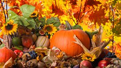В октябре садоводы активно ведут сбор оставшегося урожая