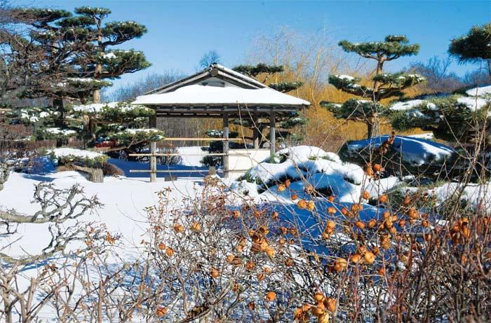 Основной задачей на участке в декабре является снегозадержание