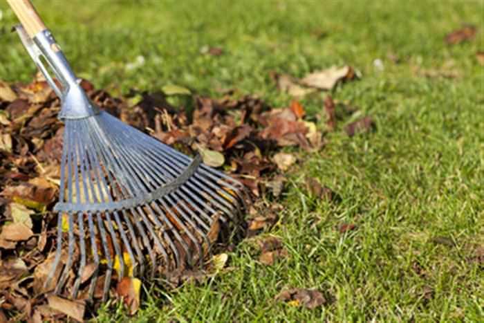 Опавшую листву требуется удалить с участка и сжечь