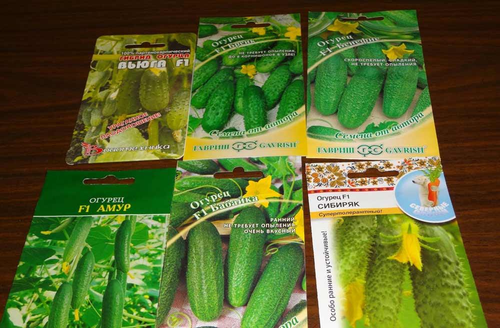 Следует помнить, что качественные семена стоят достаточно дорого, но экономить на приобретении семян нельзя, так как такая экономия может негативно сказаться на урожайности