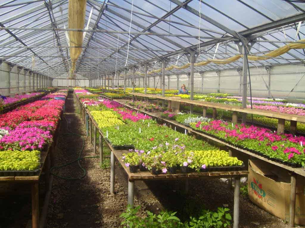 Наличие отличительных характеристик позволяет оптимизировать подбор теплицы или парника для дачи в строгом соответствии с требованиями, которые предъявляются агротехникой для выращивания определённого типа растений