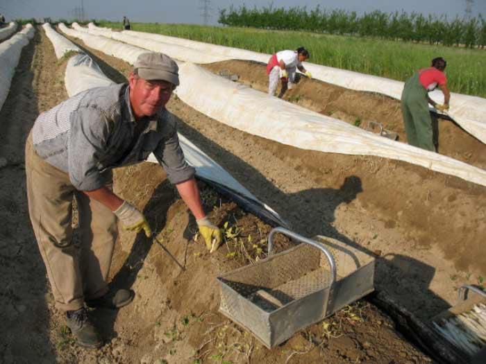 Оптимальным вариантом является высадка растений в плодородный и максимально лёгкий грунт
