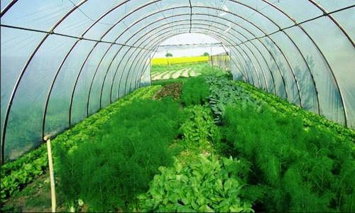 Все очень просто. Вам понадобится теплица, семена зелени для выращивания и впоследствии торговая точка, где вы будете реализовать урожай