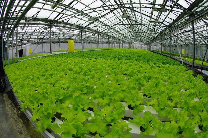Но прежде чем заняться выращиванием того или иного дополнительного вида зелени необходимо обращать внимание на спрос