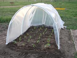 Теплицы и парники давно стали незаменимым атрибутом для выращивания теплолюбивых культур