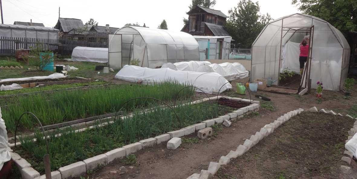 Теплицы для дачи могут быть представлены различными вариантами, а фото самых необычных и эффективных конструкций регулярно появляются на садово-огородных сайтах