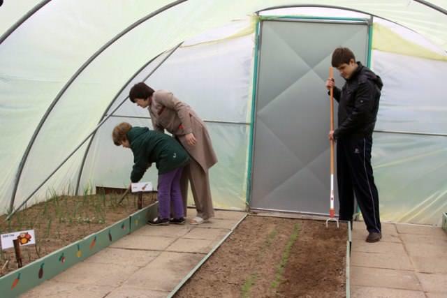 Спектр работ по обработке почвы поможет избежать возникновения вредителей