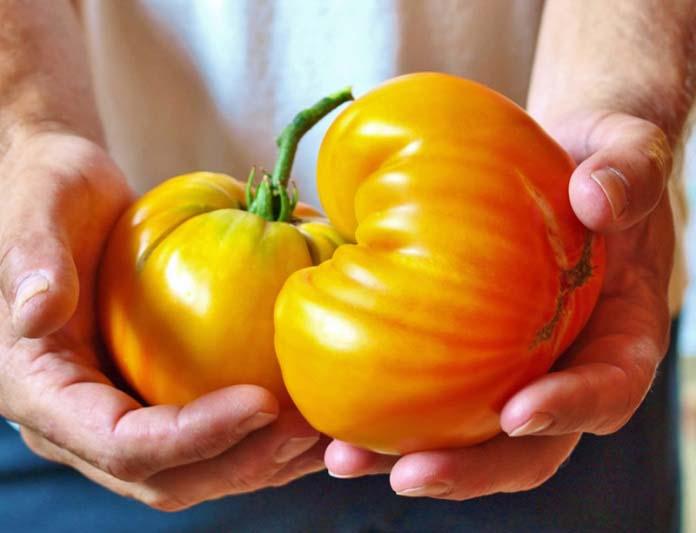 Желтые помидоры рекомендовано принимать маленьким детям и пожилым людям