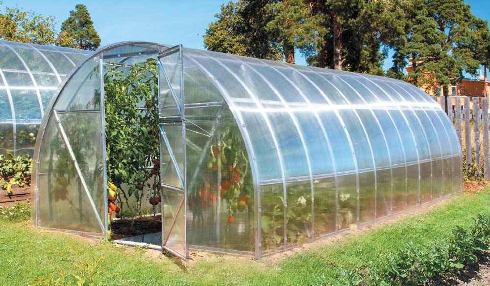 Уход за помидорами в теплице из поликарбоната несколько отличается от выращивания томатов в условиях застеклённых и плёночных парниковых сооружений