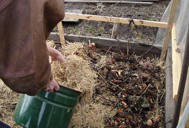 Курдюмов рекомендует накрывать почву в теплице мульчой (рыхлой органикой), препятствующей как росту сорняков, так потерям почвой влаги