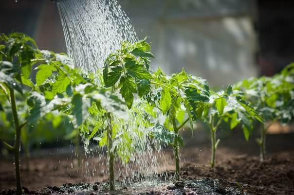 Удобрение должно соответствовать не только типу почвы в теплице, но и срокам внесения