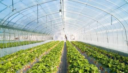 Что можно выращивать в теплице