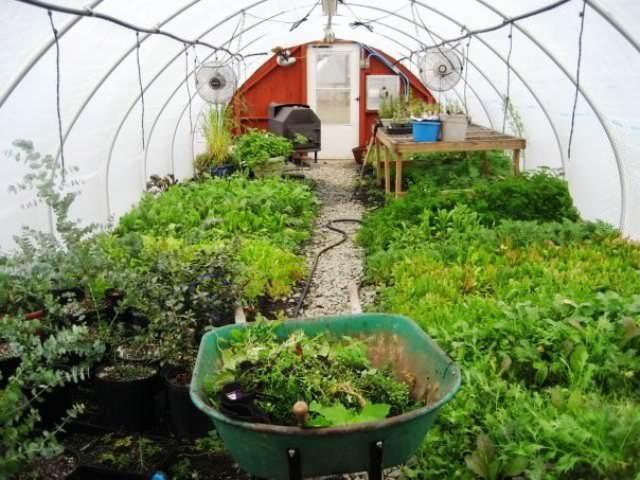 Все садоводы стремятся к тому, чтобы теплица давала урожай круглый год
