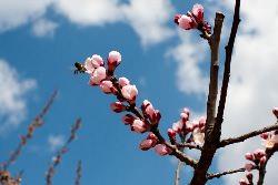 Именно на апрель приходится основной объём всех подготовительных работ по огороду