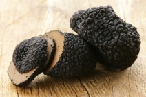 Трюфели – грибы на вес золота
