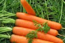 Особенности зимнего хранения моркови