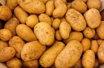 Когда сажать картофель на рассаду в 2017 году