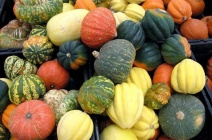 Многообразие видов и сортов тыквы