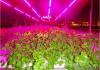 Индукционное и инфракрасное освещение парников и теплиц