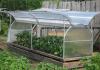 Парник бабочка: отличный урожай под заботливым крылом