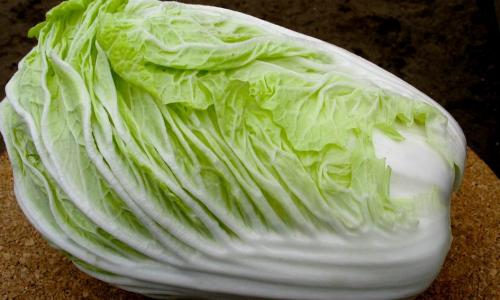 Выращивание пекинской капусты в тепличных условиях