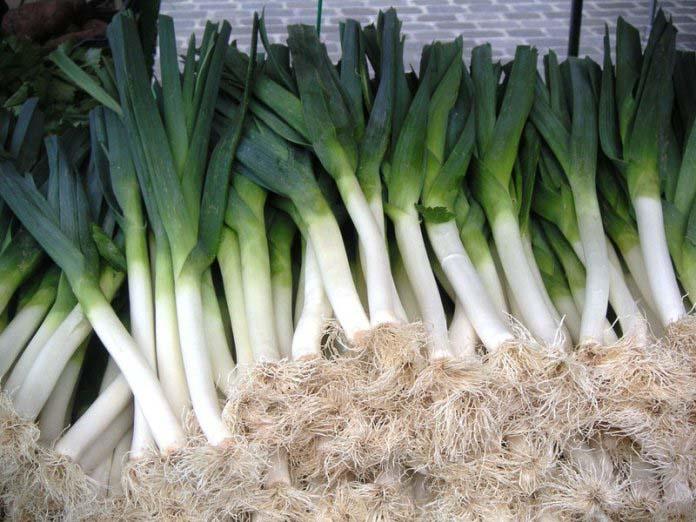 Лук-порей выращивается повсеместно и дает неплохой урожай