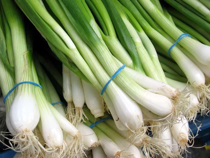 Лук на зелень лучше выращивать в теплице «термос»