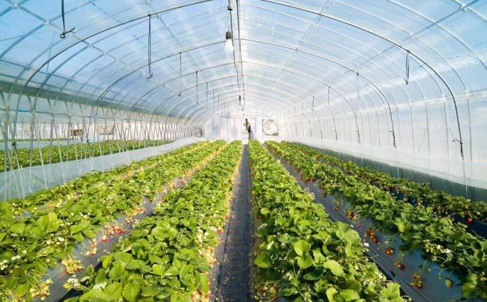 Контроллеры поливов делают возможным орошение огромных тепличных площадей с любыми видами растений
